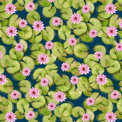 Dockside Lily Pads