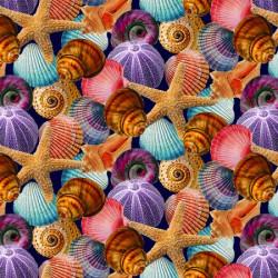 Reef Life Starfish