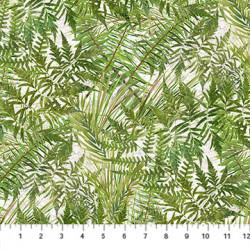 Tenderfoot Ferns