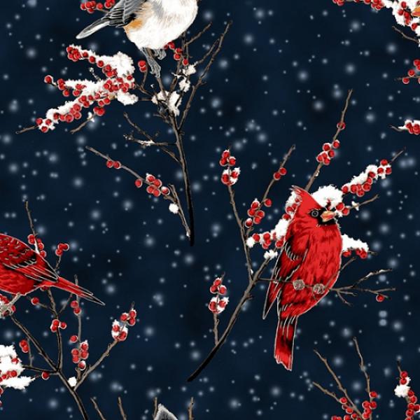 A Winter's Sky Midnight