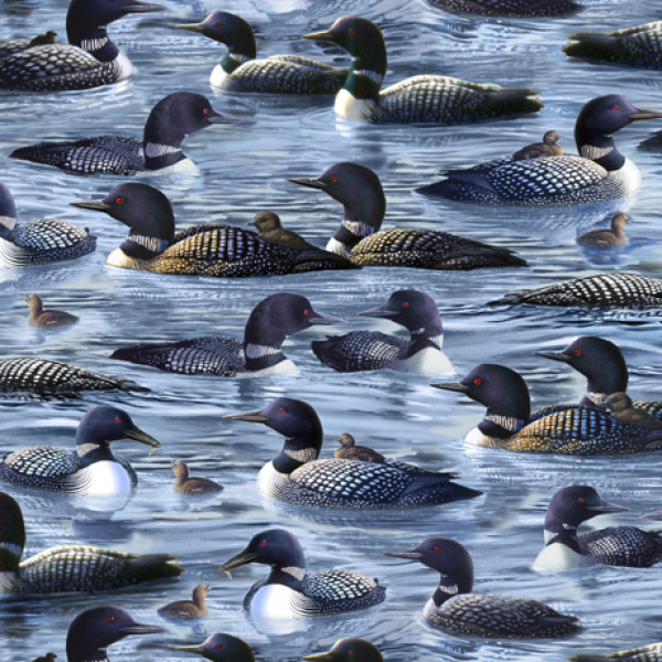 Loons on Blue