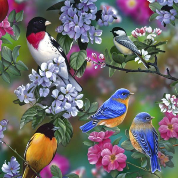 Scenic Songbirds