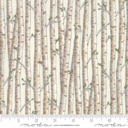 Explore White Birch Trees
