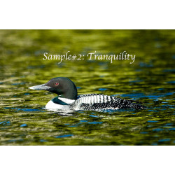 Tranquility Loon Card