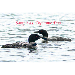Dynamic Duo Loons
