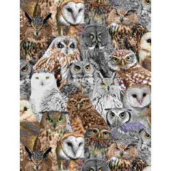 Realistic Owls