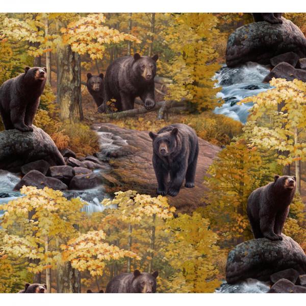 Black Bear Scene
