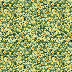 Roaming Wild Yellow Daisies