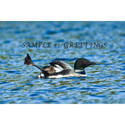 Greetings Loon Card
